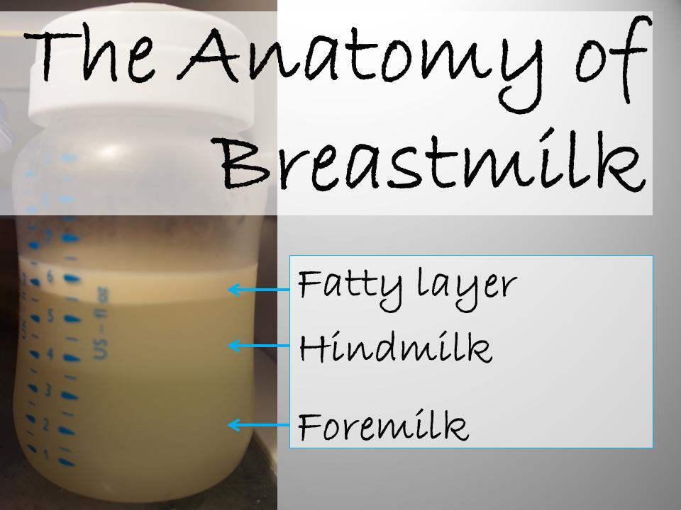 The Anatomy of Breastmilk