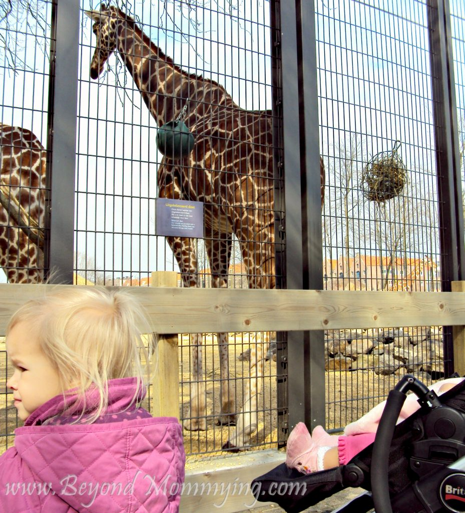 Traveling to Amsterdam with Kids, visiting the Artis Royal Zoo