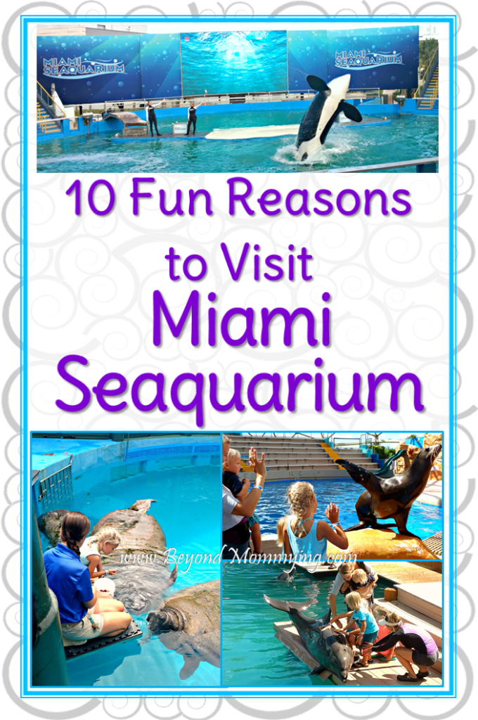 10 Reasons why you need to visit the Miami Seaquarium from the animal encounters to the shows and the educational programs, it's fun for everyone! [ad]